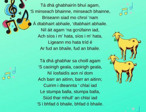 Tá Dhá Ghabhairín Bhuí Agam